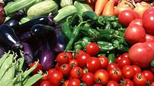 برداشت ۸۸ درصدی محصولات جالیزی در گلستان
