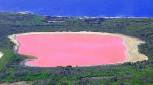 دریاچه آرژانتینی بر اثر آلودگی، صورتی شد!