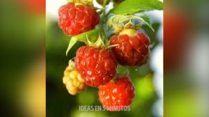 چند روش جالب برای کشت میوهها در منزل
