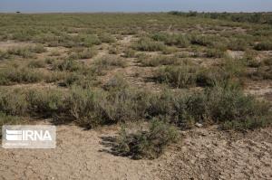 ۳۸۰۰ هکتار از حاشیه دریاچه ارومیه در آذربایجانشرقی بوتهکاری شد