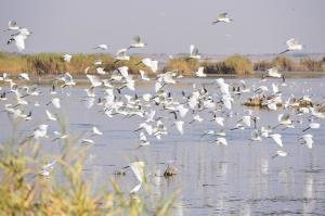 معاون اداره کل محیط زیست: حال تالابهای آذربایجانغربی خوب نیست