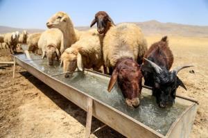 نصف آب آشامیدنی روستاییان کلاله به مصرف دامها میرسد