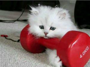 گربه ورزشکار!