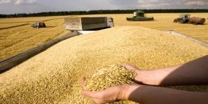 زنگ هشدار به مسئولان داخل با افزایش 9دلاری قیمت گندم در بازار جهانی