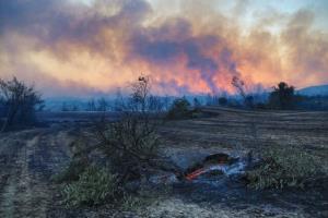 آتشسوزی جنگلی در جنوب ترکیه قربانی گرفت