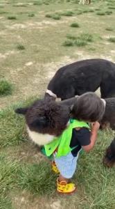 مهربانی دیدنی حیوان به یک کودک