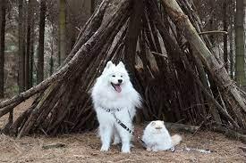 بازی خندهدار و تماشایی یک سگ و گربه سفیدرنگ در میان برف!