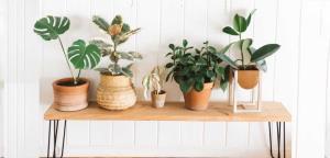 راهنمای تابستانه برای نگهداری گل و گیاه