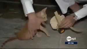 راهکار مرد عربستانی برای کمک به راه رفتن گربه