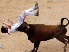 اقدام متفاوت یک گاو در برخورد با یک گاو باز!