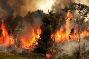 آتشسوزی گسترده جنگلی در جنوب ترکیه