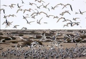 جزیره نخیلو، بهشت پرندگان