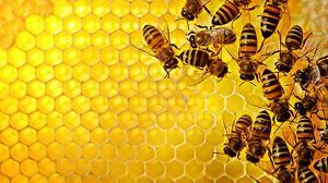 کندوی عسل شگفت انگیزی که شبیه به یک ساختمان اداری است