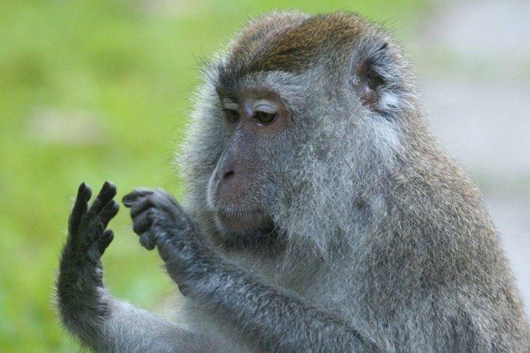چرا حيوانات اعداد را تشخيص ميدهند، اما فقط انسانها ميتوانند محاسبه انجام دهند؟