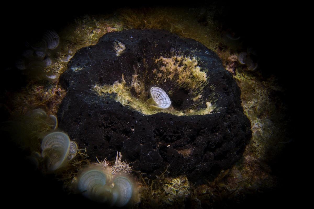 کشف فسيل ۸۹۰ ميليون سالهاي که ميتواند براي قديميترين حيات جانوري زمين باشد