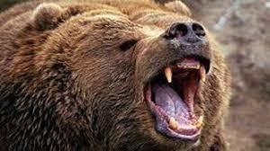 حمله خرس منجر به زخمی شدن جوان عشایر کوهرنگی شد