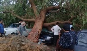 خسارت طوفان و باران در جیرفت