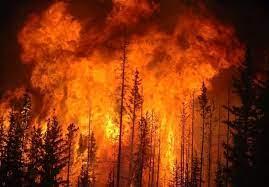 فرار آتش نشان های ترکیه از حجم آتش سوزی!