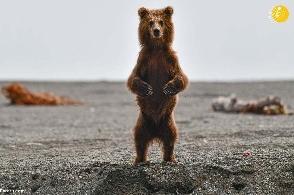 تصاویر منتخب حیات وحش در یک هفته