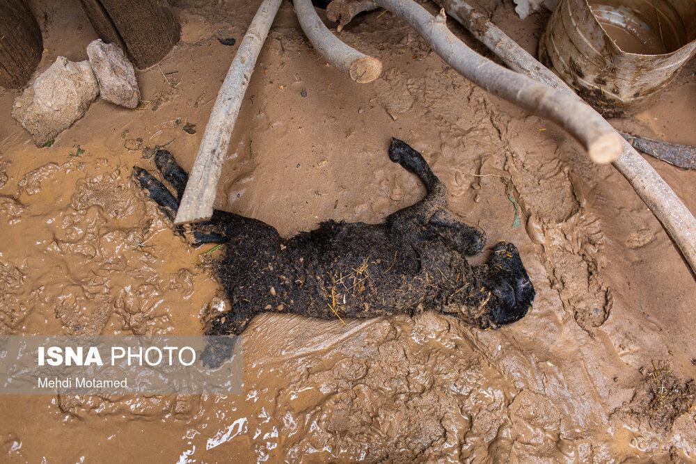 تصاویر ناگوار از خسارات سیل در شهرستان آوج استان قزوین