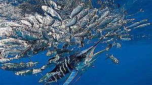 بارش انبوه ماهی برای صیاد خوش شانس