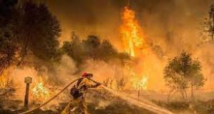 آتشسوزی مهیب نزدیکی قدس اشغالی