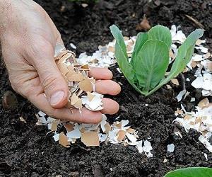فرمول تقویت گل و گیاه با پوست تخم مرغ