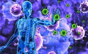سیستم ایمنی بدن چه طور کار می کند؟