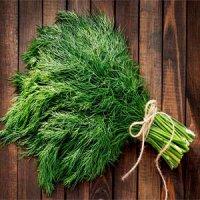 شوید؛ از محتوای تغذیه ای تا مکمل های دارویی این گیاه شگفت انگیز