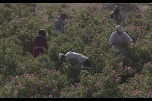 مستند «ایرانزاد» به کاشان و اصفهان رسید