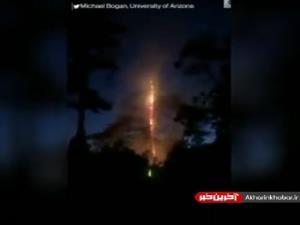 برخورد صاعقه به درخت و وقوع آتشسوزی