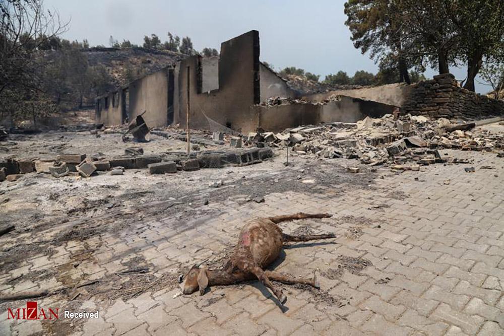 عکس/ ادامه آتش سوزی در ترکیه