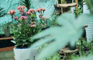 چه عواملی در گلدهی گیاهان خانگی موثر است؟