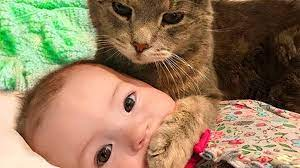 واکنش دیدنی گربه به گریه یک کودک