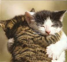 اقدام دیدنی گربه احساساتی نسبت به گریه های نوزاد!