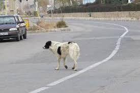 حمله سگهای ولگرد در بانه ۲ مصدوم برجای گذاشت
