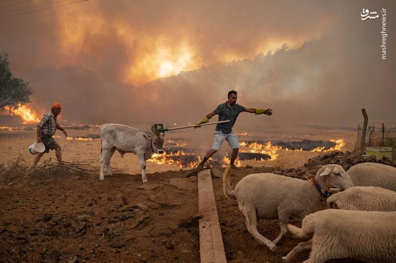 عکس/ ترکیه همچنان در آتش