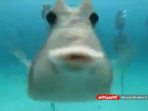 موجودات جالب زیر آب