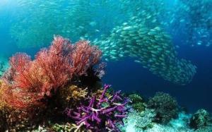 وجود یک تا ۷ میلیون گونه آبزی ناشناخته در محیطهای آبی/ضرورت توسعه سواد اقیانوسشناسی