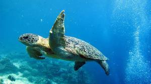نجات لاکپشت اسیر شده در لابه لای صخرهها