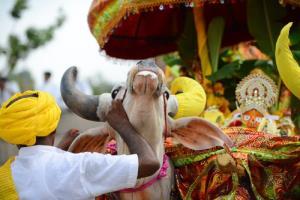 سوگواری ساکنین روستایی در هند برای مرگ گاوی محبوب