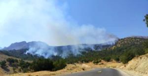 جزئیات آتشسوزیهای زنجیره ای عمدی در جنگلهای چرام