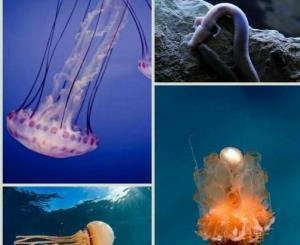 بعضی از موجودات دریایی مثل عروس دریایی هرگز پیر نمیشوند