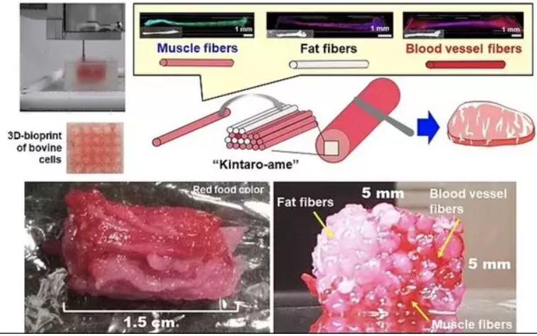 استیک آزمایشگاهی با سلول بنیادی و پرینتر ۳ بعدی تولید شد