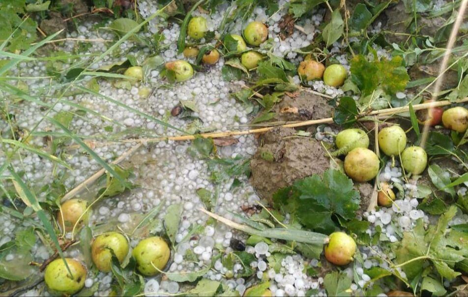 سیل و تگرگ به کشاورزی راز و جرگلان خسارت زد