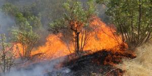 آتشسوزی در منطقه ارژن کوه پهن مهار شد