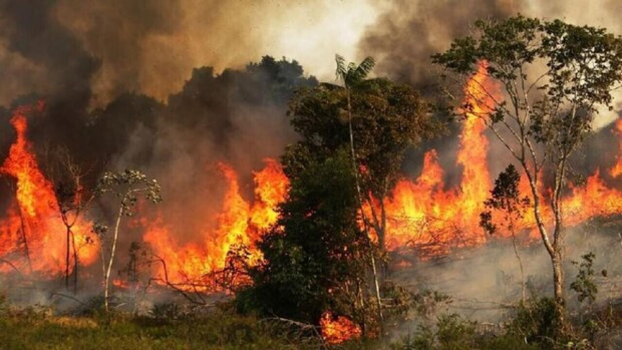 ۲ هکتار از جنگلهای منطقه گلیل و سرانی در شیروان در آتش سوخت