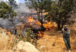 عامل آتشسوزی جنگلهای دنا مشخص شد
