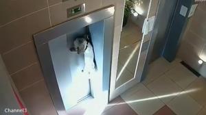 نجات یک سگ از جان باختن در میان درب آسانسور