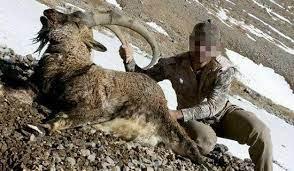 شکارچیان قوچ وحشی در چنگ قانون